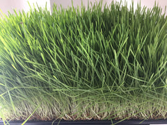 Wheatgrass for great skin and energy