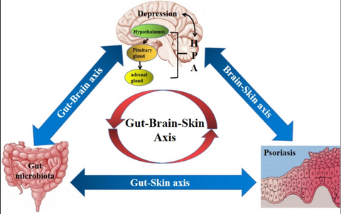 Gut Brain Skin Axis