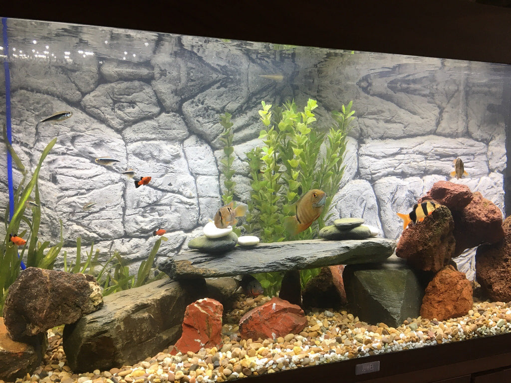 Jungle Bob 3D Aquarium Background 36x25 Inch For 65 Gallon Thin Grey 8245