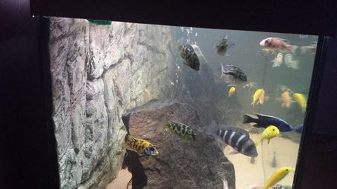 Image of Jungle Bob 3D Aquarium Background 36x25 Inch For 65 Gallon Thin Grey 8245