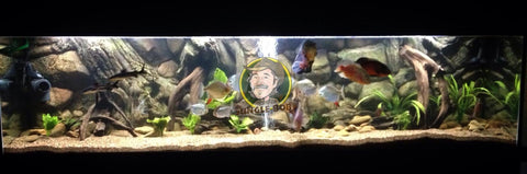 Image of Jungle Bob 3D Aquarium Background 72x25 Inch For 180 Gallon Amazon 7870