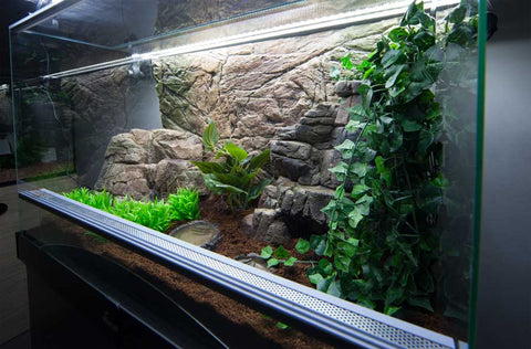 Image of Jungle Bob Aquarium Ledge Medium 8229