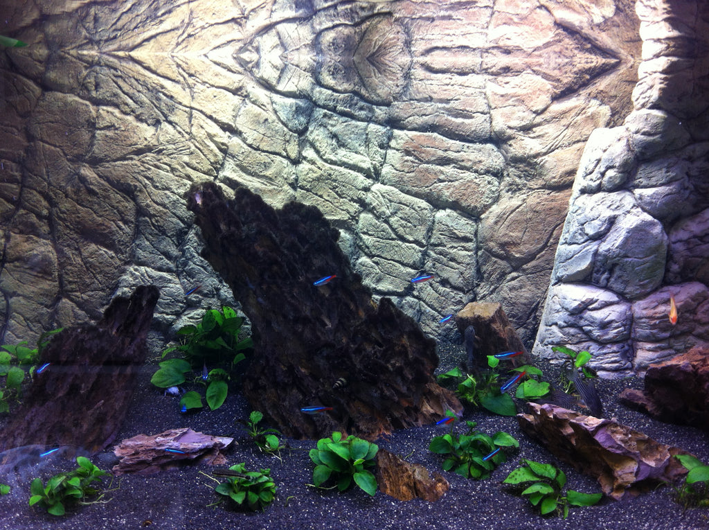 Jungle Bob 3D Aquarium Background 36x16 Inch For 30 Gallon High Thin Beige 7786