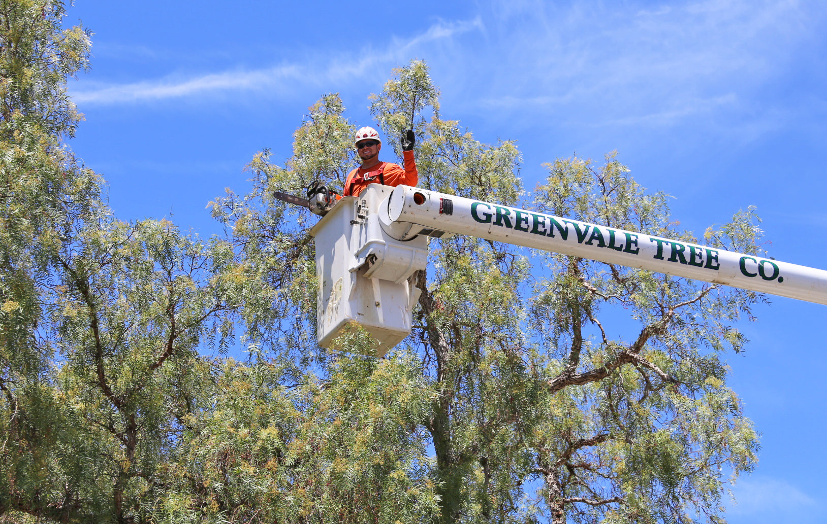 greenvale tree company arborist in cherry picker