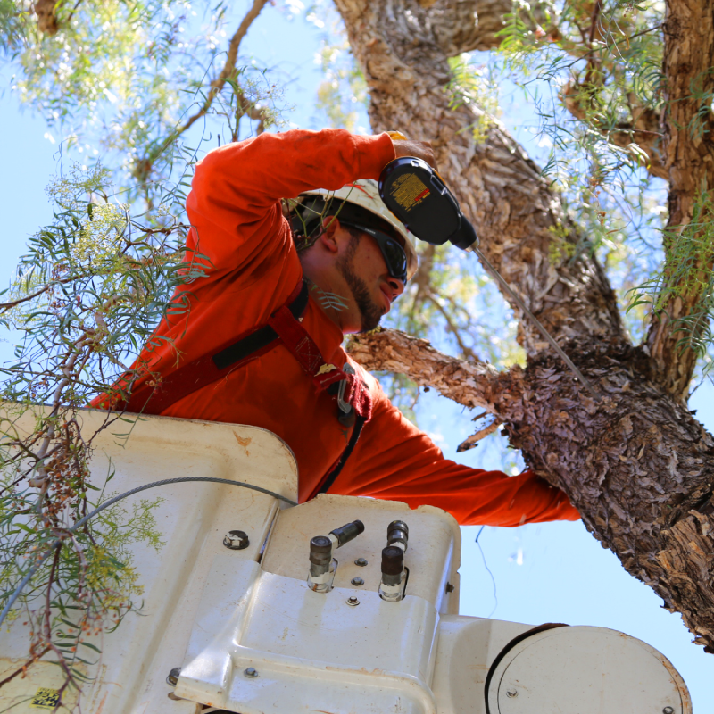 greenvale tree company arborist in tree