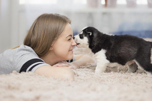 How to Make Sure Your Home is Ready for a New Puppy