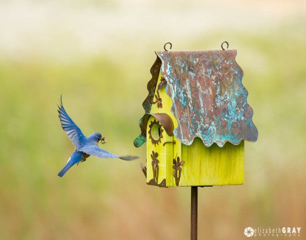 Dragonflies And Flowers Birdhouse Fly Home Birdhouses