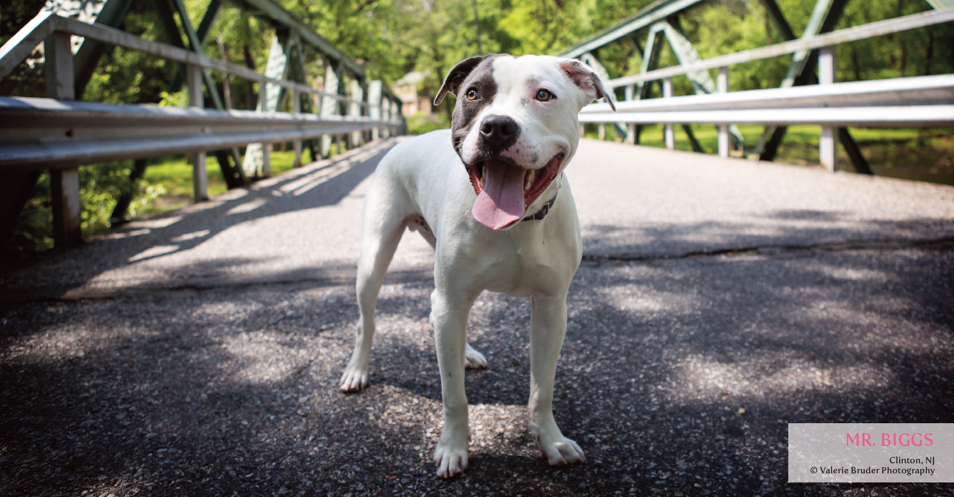 Contact Us - The Unexpected Pit Bull