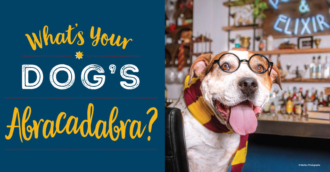 What's Your Dog's Abracadabra?