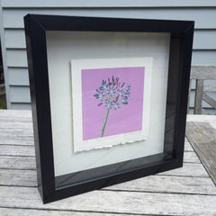 Limited Edition Print Signed Reduction Linocut Agapanthus - Dawn Framed