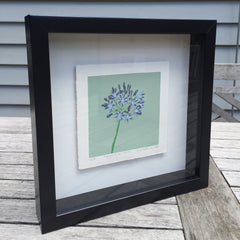 Limited Edition Print Signed Reduction Linocut Agapanthus - Mint Framed