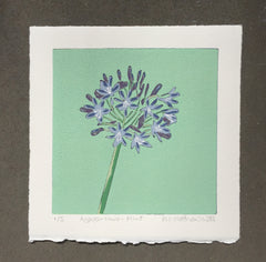 Limited Edition Print Signed Reduction Linocut Agapanthus - Mint