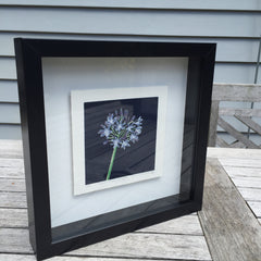 Limited Edition Print Signed Reduction Linocut Agapanthus - Night framed