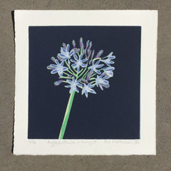 Limited Edition Print Signed Reduction Linocut Agapanthus - Night