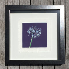 Limited Edition Print Signed Reduction Linocut Agapanthus - Royal Framed