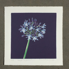 Limited Edition Print Signed Reduction Linocut Agapanthus - Royal