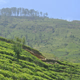 Travel | Home from Home at Tea Trails, Sri Lanka