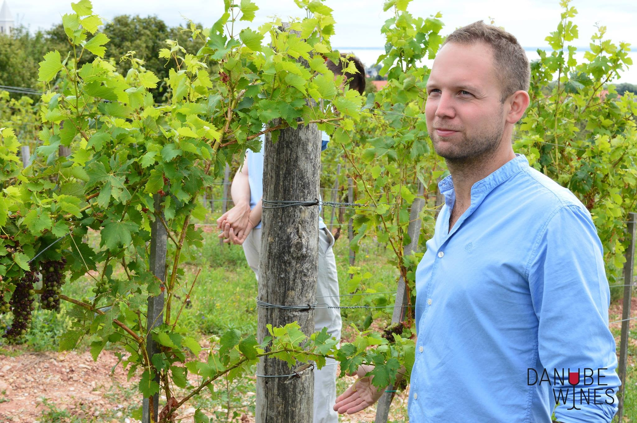 Interview with Tamas Kovacs, owner of St Donat Wine Estate in Csopak