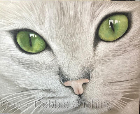 Burmilla Colored Pencils Online Class by Debbie Cushing