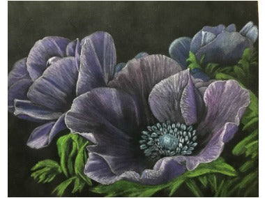Anemones Colored Pencils e-Packet by Debbie Cushing