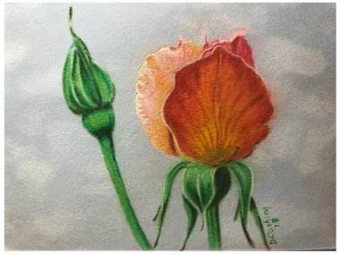 Apricot Nectar Colored Pencils e-Packet by Debbie Cushing