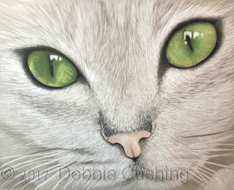 Burmilla Colored Pencils e-Packet by Debbie Cushing
