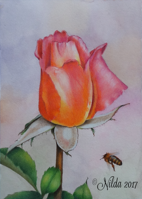 Colors of Spring Colored Pencils Online Class by Nilda