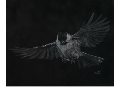 Flight II Colored Pencils e-Packet by Debbie Cushing