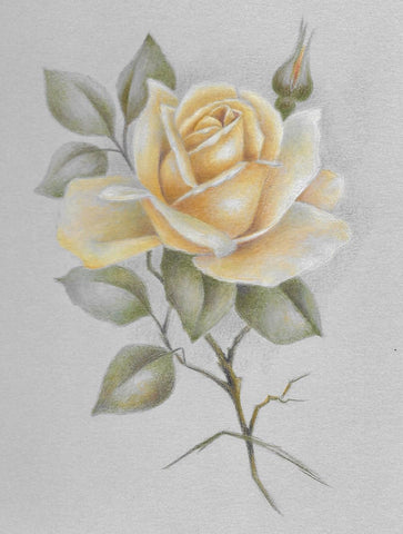 Yellow Rose colored pencils Online Class by Sharon Shannon