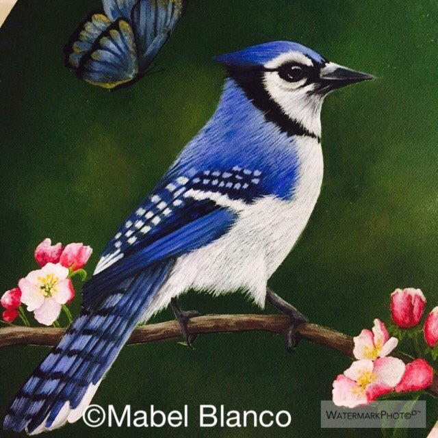 Blue Jay with Butterfly Online Class by Mabel Blanco