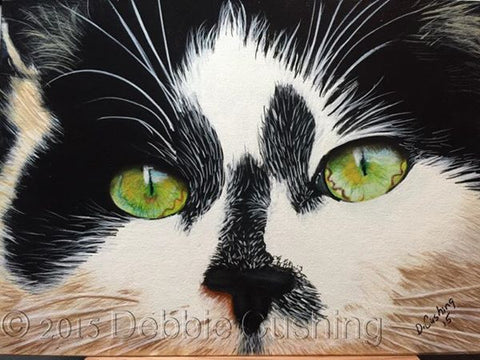 Splodge the Cat by Debbie Cushing
