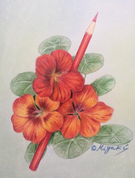 English Nasturium by Miyuki Nakano Colored Pencils E-packet