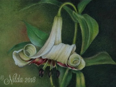 Fleur De Lis Colored Pencils Online Class by Nilda