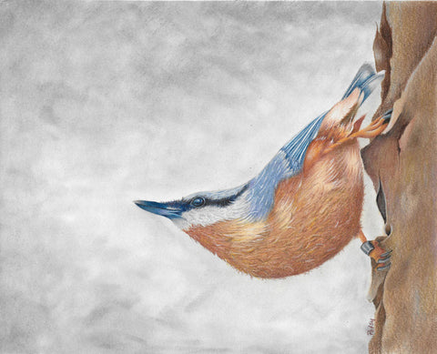 The Nuthatch Online Class by Patsy Deal