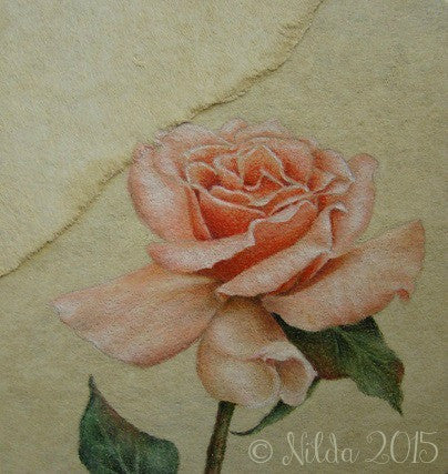 Peach Rose Study e-Packet