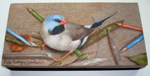 Shaft Tail Finch colored pencils e-Packet by Nilda Rosa Rodriguez