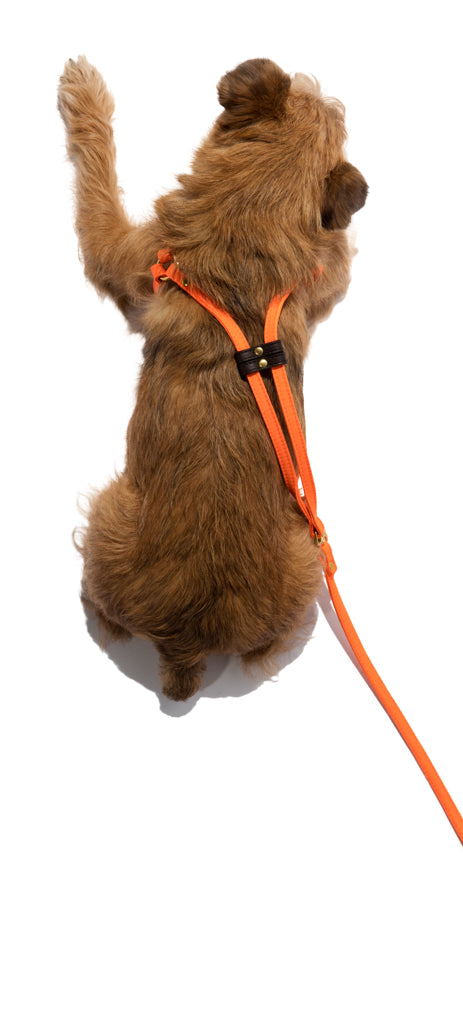 Step-In Dog Harness & Leash Nylon w/Leather Accents