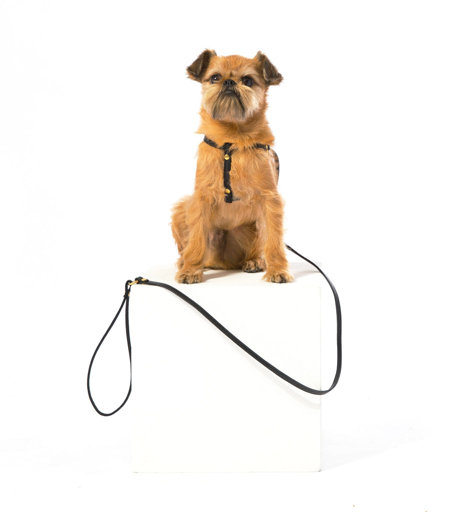 Step-In Harness & Leash