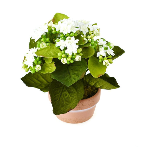 Artificial Silk Kalanchoe Flower Pot, White, 8-Inch