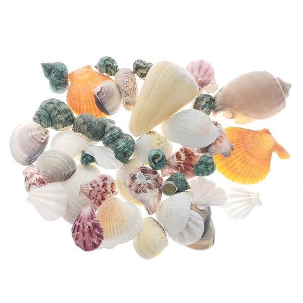 Mixed Shells & Conchs Decorative Vase Filler, 14-Ounce