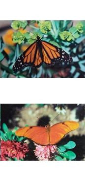 Monarch Butterfly Bookmark Orange Julia Wildlife Insects Pollinators Garden Beauty