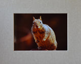 California Ground Squirrel 8X10 Matted Photo Rodents Wildlife