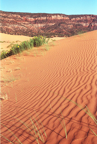 The Sands of Time 8X10 Matted Photo Southwest Coral Pink Sand Dunes