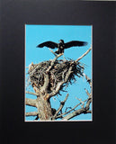 First Flight 8X10 Matted Photo Birds Yellowstone Wildlife Bald Eagle Chick