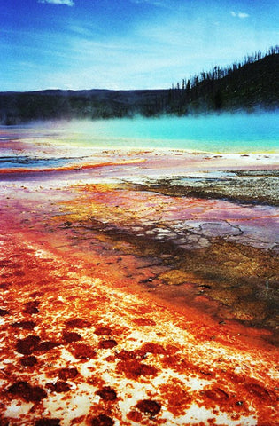 Grand Prismatic Spring 8X10 Matted Photo Yellowstone National Park Pools/Hot Springs