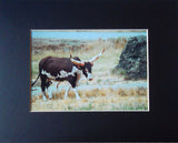Longhorn on the Range 8X10 Matted Photo Wildlife Old West Cowboy Western Motif