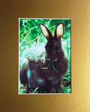 Munching Bunny 8X10 Matted Photo Wildlife Rabbit Olympic National Park Easter Motif
