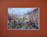 New Growth (After the Fire) 8X10 Matted Photo Glacier National Park