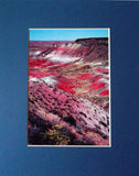Painted Desert 8X10 Matted Photo Southwest Petrified Forest National Park