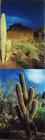 Desert Southwest Scenery Scenic Bookmark #2 Glowing Cactus Picacho Peak State Park Boyce Thompson Arboretum Arizona Plants Cacti